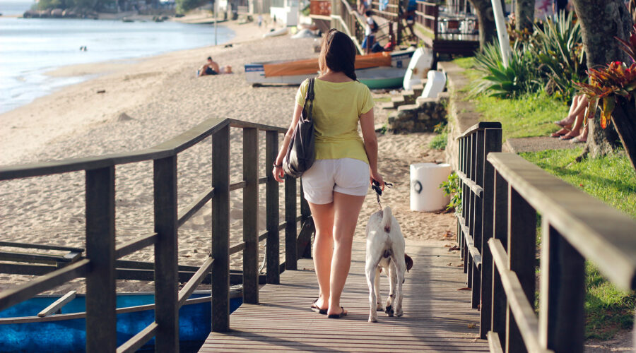 Keep Pets Happy and Safe on Vacation